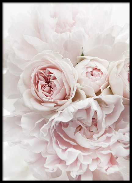 Peonies and Roses Poster in the group Posters & Prints / Photography at Desenio AB (11791)