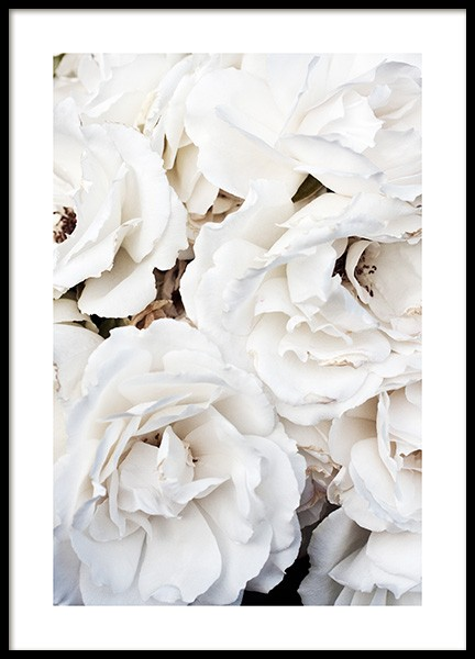 White Roses Poster in the group Posters & Prints / Botanical at Desenio AB (11792)
