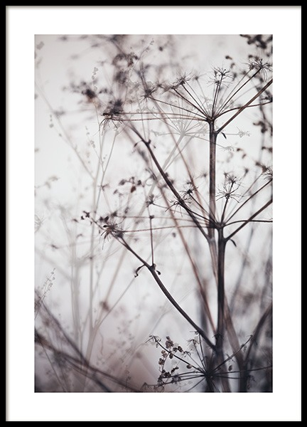 Dry Plant No1 Poster in the group Posters & Prints / Photography at Desenio AB (11794)