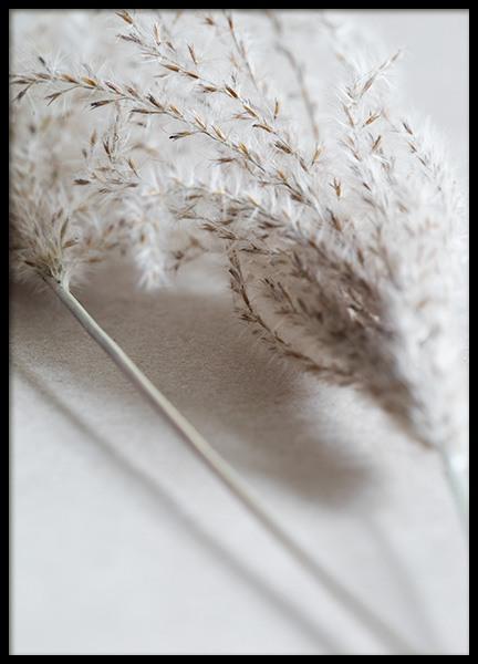 Close Up of Reeds Poster