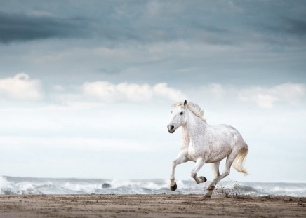 Running White Horse Poster in the group Posters & Prints / Insects & animals at Desenio AB (11849)