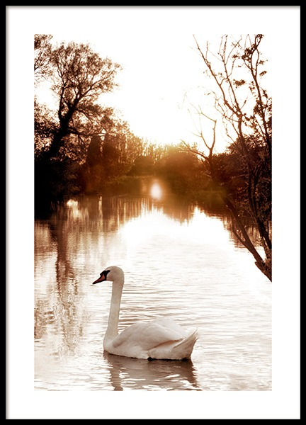 Swan on River Poster in the group Posters & Prints / Photography at Desenio AB (11852)
