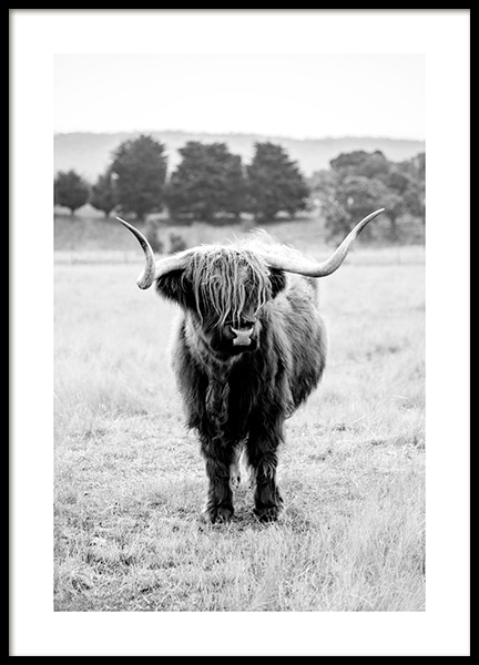 Highland Cattle B&W Poster in the group Posters & Prints / Insects & animals at Desenio AB (11854)