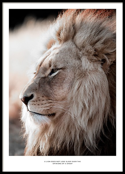 African Lion Poster in the group Posters & Prints / Insects & animals at Desenio AB (11857)