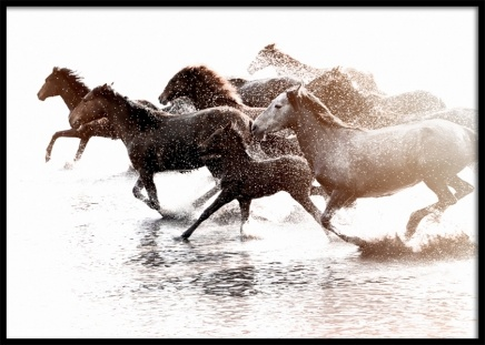Running Horses Poster in the group Posters & Prints / Photography at Desenio AB (11861)