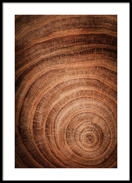 Growth Rings Poster in the group Posters & Prints / Nature at Desenio AB (11873)