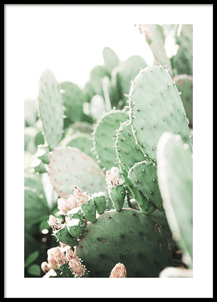 Prickly Pear Cactus Poster in the group Posters & Prints / Botanical at Desenio AB (11892)