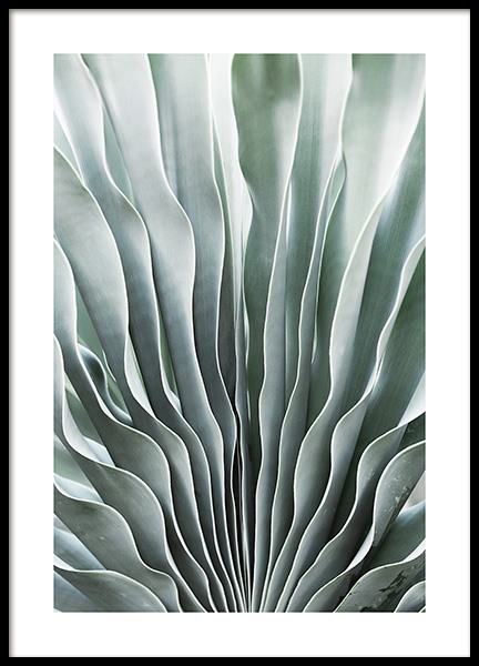 Mint Boophone Poster in the group Posters & Prints / Botanical at Desenio AB (11957)