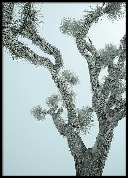 Mint Joshua Tree Poster in the group Posters & Prints / Botanical at Desenio AB (11958)
