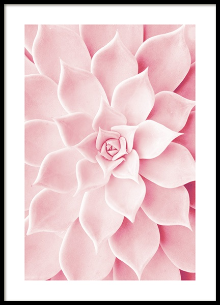 Pink Succulent Poster in the group Posters & Prints / Photography at Desenio AB (12021)
