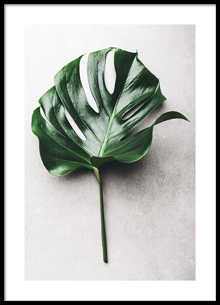 Green Monstera Leaf No1 Poster in the group Posters & Prints / Photography at Desenio AB (12050)
