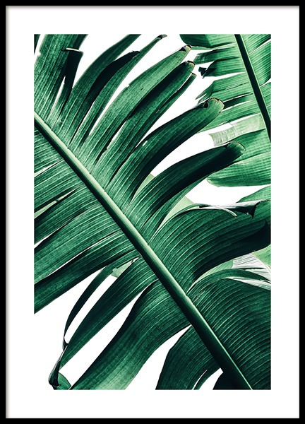 Banana Palm Leaves No2 Poster in the group Posters & Prints / Photography at Desenio AB (12053)