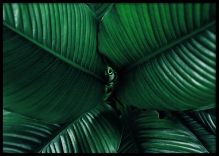 Dark Green Leaves Poster in the group Posters & Prints / Sizes / 50x70cm | 20x28 at Desenio AB (12057)