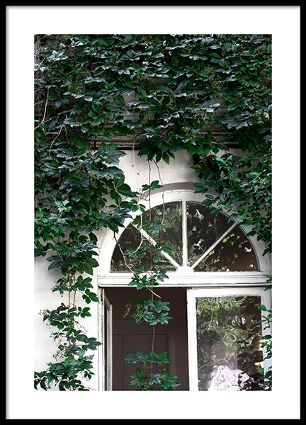 Climbing Ivy No1 Poster in the group Posters & Prints / Nature at Desenio AB (12077)