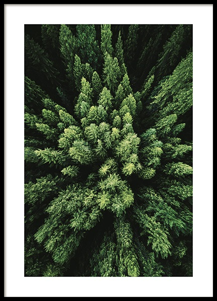 Aerial Forest Poster in the group Posters & Prints / Nature at Desenio AB (12083)