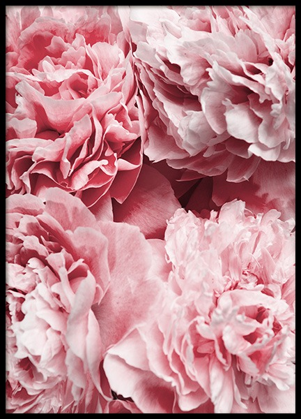 Peony Flowers Poster in the group Posters & Prints / Botanical at Desenio AB (12110)
