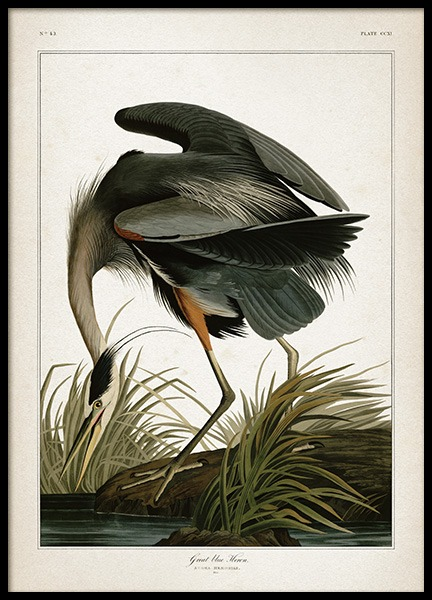 Great Blue Heron Poster in the group Posters & Prints / Vintage at Desenio AB (12172)