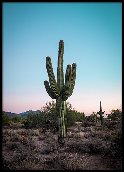 Cactus in Desert Poster in the group Posters & Prints / Photography at Desenio AB (12219)