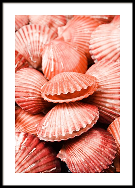 Coral Seashells Poster in the group Posters & Prints / Sizes / 50x70cm | 20x28 at Desenio AB (12241)