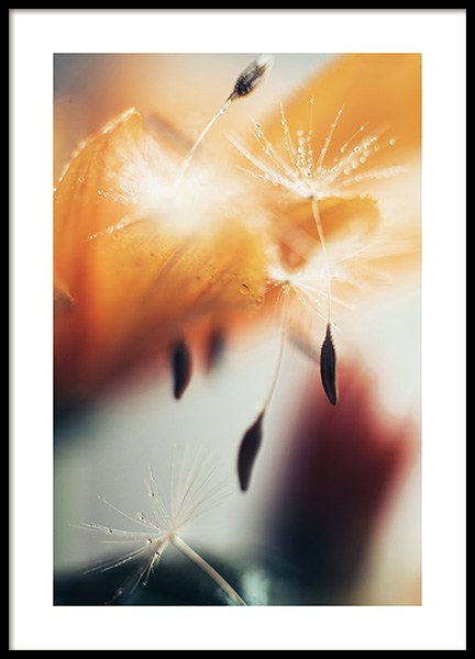 Dandelion Seeds Poster in the group Posters & Prints / Botanical at Desenio AB (12252)
