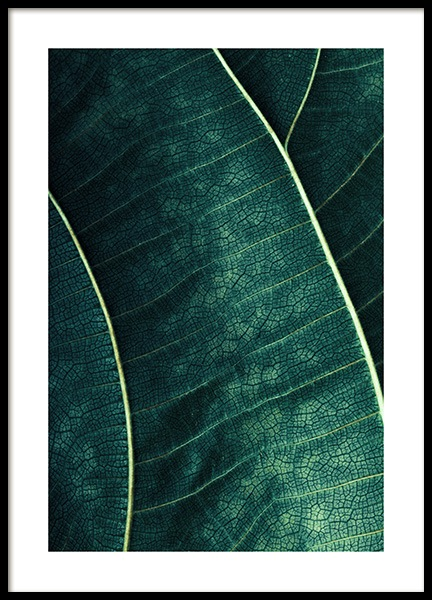 Green Broadleaf Poster in the group Posters & Prints / Botanical at Desenio AB (12271)