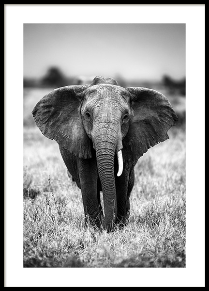 Elephant on the Savanna Poster in the group Posters & Prints / Black & white at Desenio AB (12301)