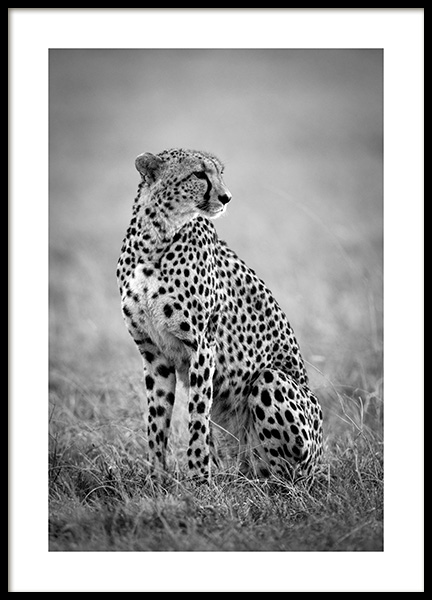 Cheetah B&W Poster in the group Posters & Prints / Sizes / 30x40cm | 12x16 at Desenio AB (12302)
