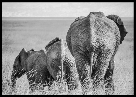 Elephant Family Poster in the group Posters & Prints / Insects & animals at Desenio AB (12305)