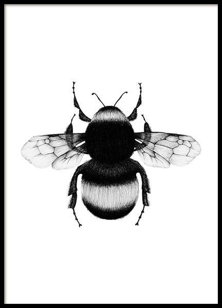 Bumblebee Drawing Poster in the group Posters & Prints / Black & white at Desenio AB (12309)
