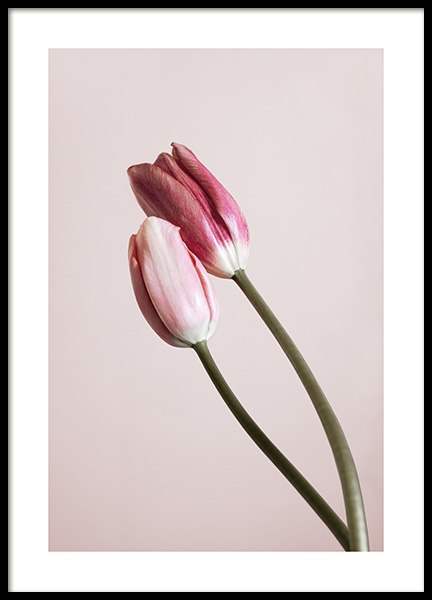 Tulip Buds No2 Poster in the group Posters & Prints / Sizes / 50x70cm | 20x28 at Desenio AB (12323)