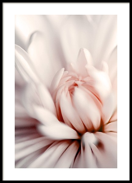 Pink Dahlia Close up Poster in the group Posters & Prints / Botanical at Desenio AB (12330)