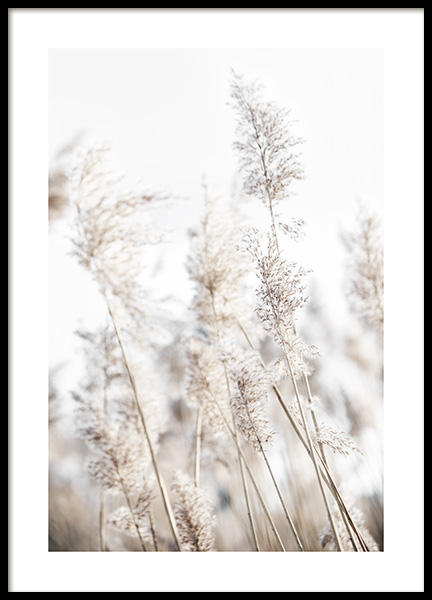 In the Reeds No2 Poster in the group Posters & Prints / Photography at Desenio AB (12424)