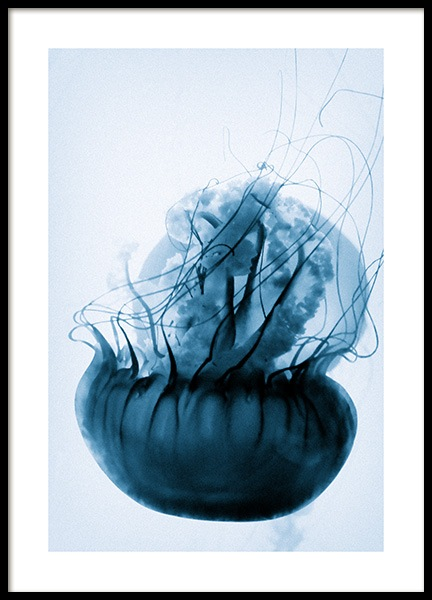 Floating Blue Jellyfish Poster in the group Posters & Prints / Photography at Desenio AB (12434)