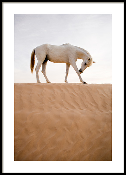 Horse in Desert Poster in the group Posters & Prints / Insects & animals at Desenio AB (12534)