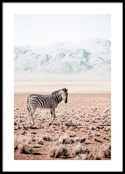 Zebra in the Wild Poster in the group Posters & Prints / Insects & animals at Desenio AB (12539)