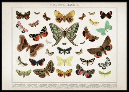Vintage Butterflies No2 Poster in the group Posters & Prints / Vintage at Desenio AB (12554)