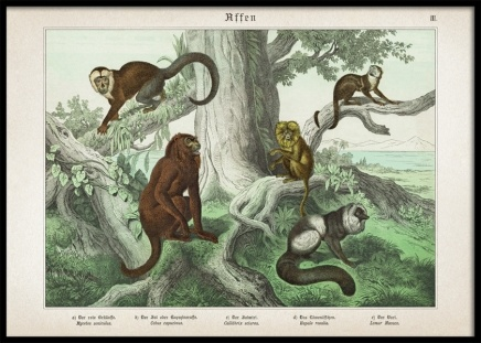 Vintage Monkeys No1 Poster in the group Posters & Prints / Sizes / 50x70cm | 20x28 at Desenio AB (12555)