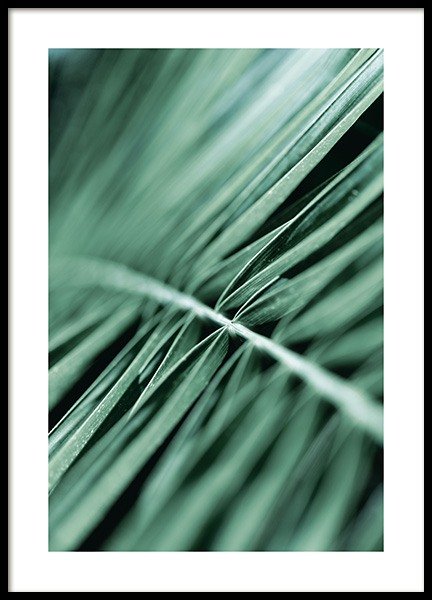 Dreamy Palm Leaf Poster in the group Posters & Prints / Photography at Desenio AB (12563)