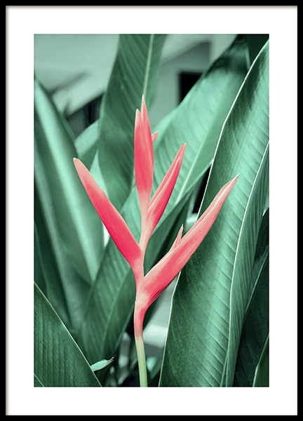 Tropical Flower Poster in the group Posters & Prints / Botanical at Desenio AB (12565)