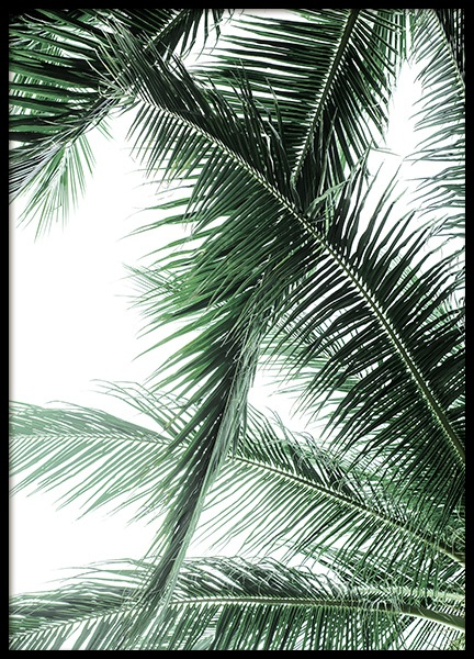 Palm Fronds Poster in the group Posters & Prints / Photography at Desenio AB (12567)