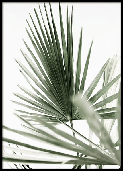 Tropic Palm Poster in the group Posters & Prints / Photography at Desenio AB (12568)