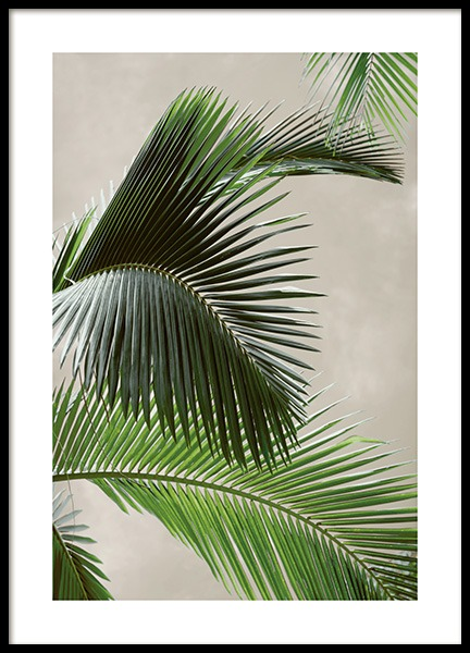 Tropical Palm Poster in the group Posters & Prints / Botanical at Desenio AB (12570)