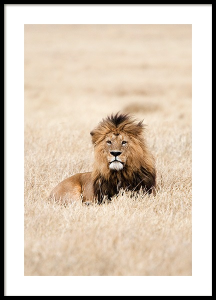 Lion King Poster in the group Posters & Prints / Photography at Desenio AB (12573)