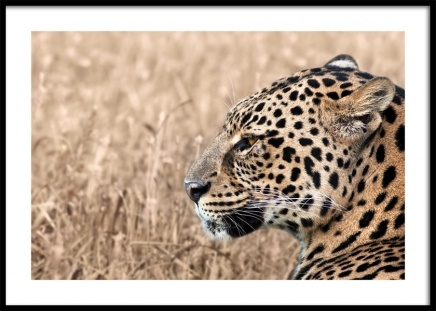 Persian Leopard Poster in the group Posters & Prints / Photography at Desenio AB (12575)