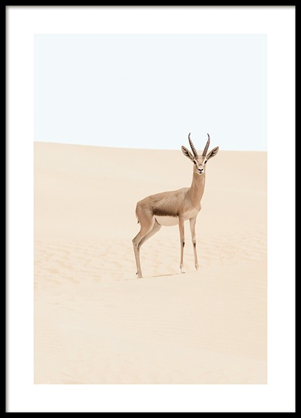 Arabian Gazelle Poster in the group Posters & Prints / Insects & animals at Desenio AB (12577)