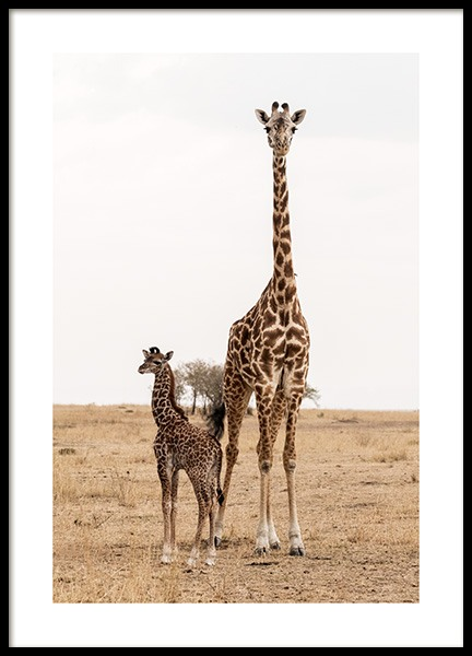 Mother and Baby Giraffe Poster in the group Posters & Prints / Insects & animals at Desenio AB (12578)