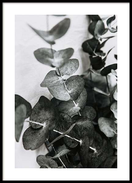 Eucalyptus Bouquet No1 Poster in the group Posters & Prints / Photography at Desenio AB (12581)