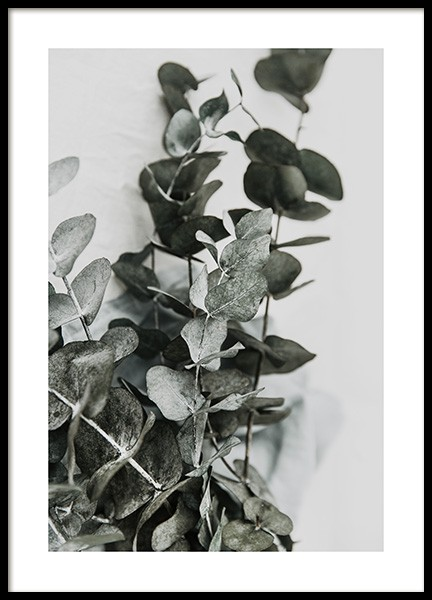 Eucalyptus Bouquet No2 Poster in the group Posters & Prints / Botanical at Desenio AB (12582)