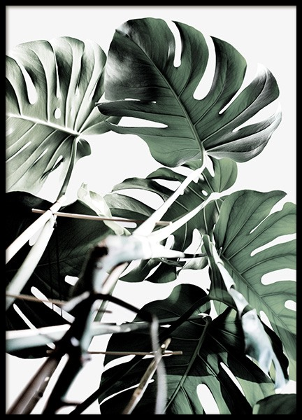 Monstera Cluster Poster in the group Posters & Prints / Photography at Desenio AB (12583)