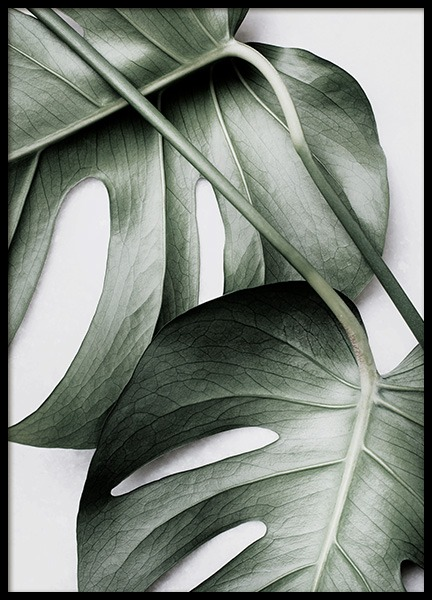 Monstera Pair Poster in the group Posters & Prints / Photography at Desenio AB (12584)